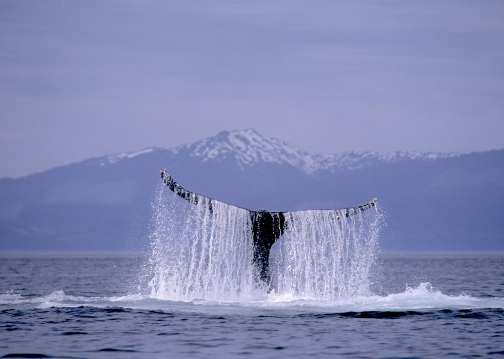 RCI_Whale Alaska_ISP