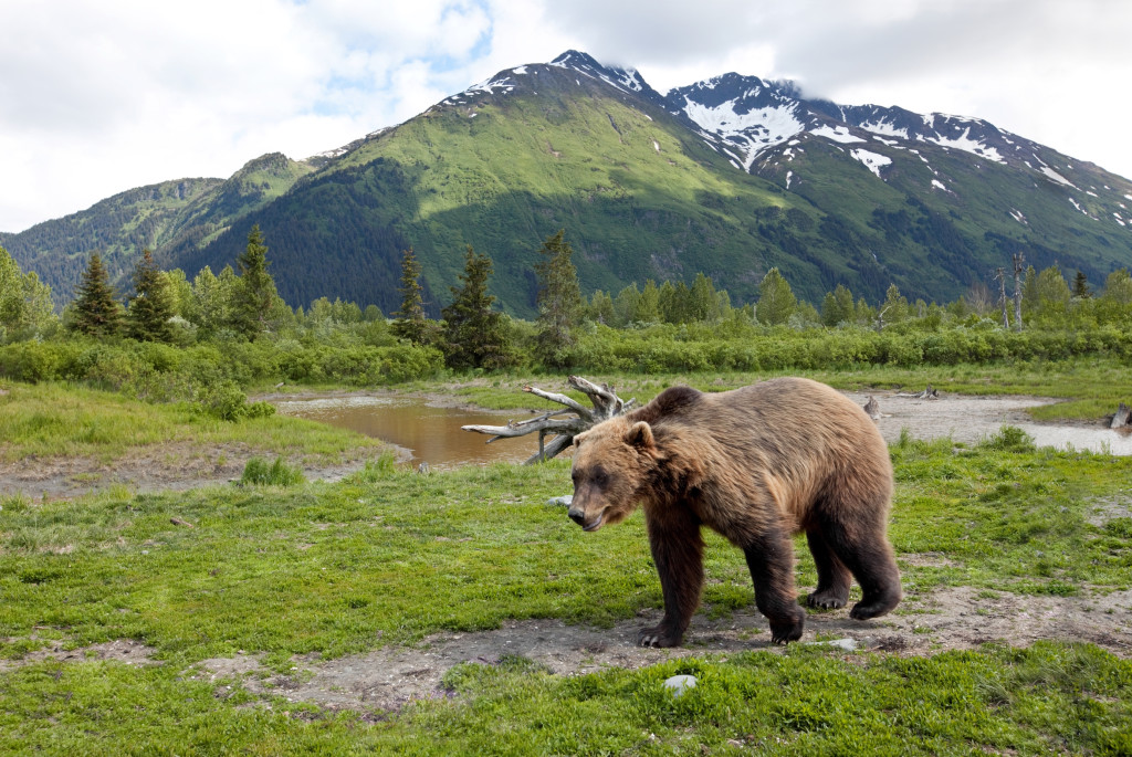 Wildlife Rehabilitation Center - Alaska