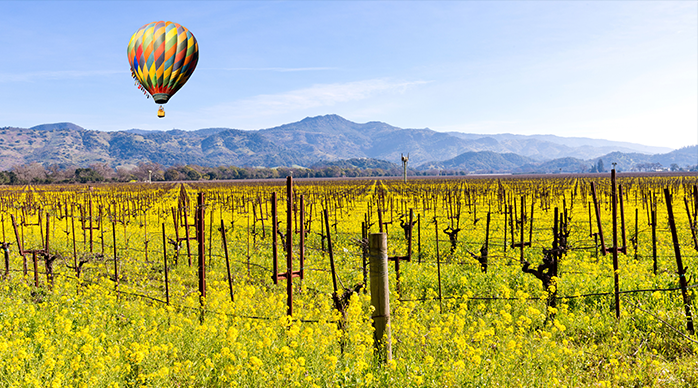 Hot air ballon over Napa vineyard at daybreak