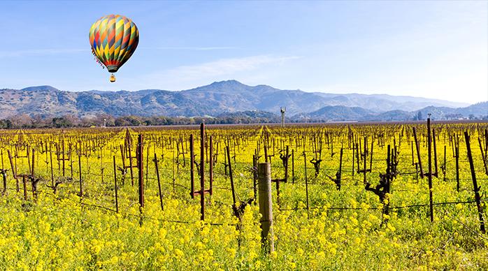 Hot air ballon over Napa vineyard at daybreak